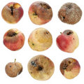 The Rotten Spoiled Inedible Apples Set Royalty Free Stock Photos - 21130878