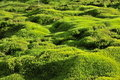 Moss Green Background. Royalty Free Stock Photos - 21218998