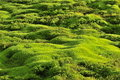 Moss Green Background. Royalty Free Stock Photos - 21219178