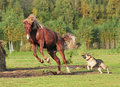 Horse And Dog Play Together Stock Image - 21238821