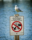 Seagull Perched Atop Do Not Feed Wildlife Sign Royalty Free Stock Photos - 21246558