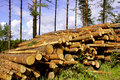 Pine Timber In Forest Royalty Free Stock Image - 21253346
