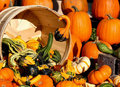 Pumpkins And Gourds Royalty Free Stock Photography - 21270247