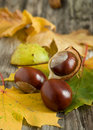 Chestnuts Stock Photo - 21299370