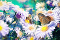 Bee And Butterfly On Flowers Stock Photography - 21346022