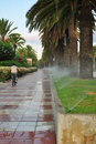 Watering Of Palm Tree Alley Stock Photo - 21353220
