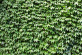 Background Of Green Leaves Stock Photos - 21354423