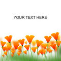 Orange Color Flowers On White Space For Messages Royalty Free Stock Images - 21389859
