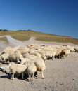 Flock Of Sheep Stock Photography - 21398972