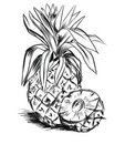Sketch For Pineaple Stock Photography - 2146542