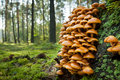 Wild Mushroom In The Forest Stock Images - 21409294