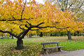 Yellow Tree And A Bench Stock Image - 21418211