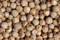 Red Lotus Seeds Royalty Free Stock Photography - 21460057