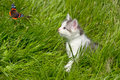 Kitten In The Grass Royalty Free Stock Images - 21475259