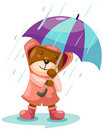 Cute Bear In Rain With Umbrella Royalty Free Stock Images - 21477389