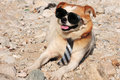 Funny Puppy In Sunglasses Stock Photography - 21483072