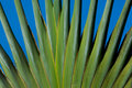 Palm Trees Branching Out Stock Image - 2154771