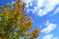 Tree Leaves Changing Colors During The Fall Season Stock Photos - 21509193