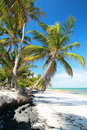 Palms On Beautiful Caribbean Beach Royalty Free Stock Images - 21519159