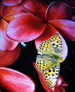 Orange Butterfly Perched On The Flower Of A Screen Royalty Free Stock Images - 21527909