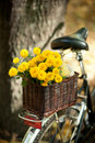 Chrysanthemums In A Wicker Basket Royalty Free Stock Photography - 21569547