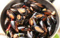 Steamed Mussels Royalty Free Stock Photo - 21599985