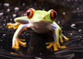 Frog Stock Photography - 2168802