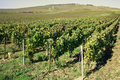 Region Of Champagne In France Stock Photos - 21611613