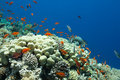 Fish And Corals In The Sea Stock Images - 21635334