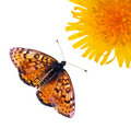 Butterfly Royalty Free Stock Photos - 21706068