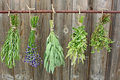 Drying Herbs Stock Photography - 21713762