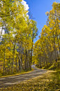 Fall Road On The Grand Mesa 2 Stock Image - 21753041