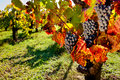 Vineyard Stock Images - 21891894