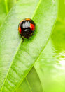 Small Bug Stock Photography - 2191282