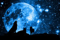 Wolves And Moon Royalty Free Stock Image - 21901806