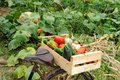 Vegetables Bike Two Royalty Free Stock Photo - 21922995