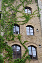 Windows With Ivy Stock Photos - 21947733
