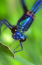 Blue Dragonfly Stock Photography - 2209502