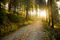 Autumn Forest Path Royalty Free Stock Photo - 22012345