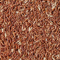 Red Rice Background Royalty Free Stock Photos - 22016958