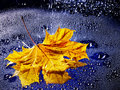 Leaf Floating On Water With Rain. Stock Image - 22034891