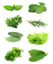 Collage Of Green And Juice Spice Stock Images - 22059684