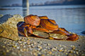 Large Mussel Shells Stock Photos - 22067443