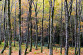 Autumn Woods Royalty Free Stock Images - 22087599