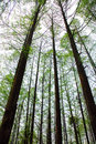 Tall Trees In Forest Stock Photo - 2216050