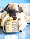 Puppy Pug And Gifts Stock Photos - 22107063