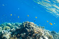 Fish And Corals In The Sea Royalty Free Stock Image - 22157366