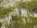 Beach Grass And Crowberry In The Dunes Of Sylt Royalty Free Stock Image - 22210436