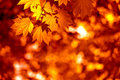 Autumnal Leaves Stock Images - 22244674
