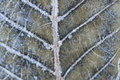 Close-up Macro Detail Of Frozen Leaf Stock Photo - 22281120